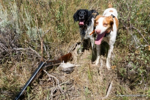 Grouse Hunting Dogs