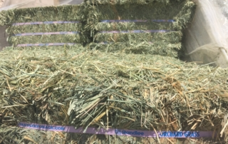 Types of Hay for Weight Gain in Horses and Vitalix