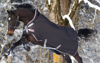 How to Blanket Your Horse for Winter or Rain